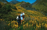 Kaikoura Wilderness Guided Walk