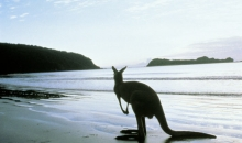 2day Kangaroo Island Coast to Coast Cruise/Fly