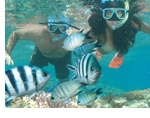Great Barrier Reef Experience from Hamilton Island