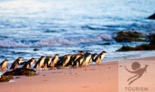 Wildlife & Wineries (Melbourne to Melbourne) 3 nights